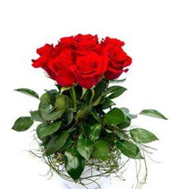 elegant-roses
