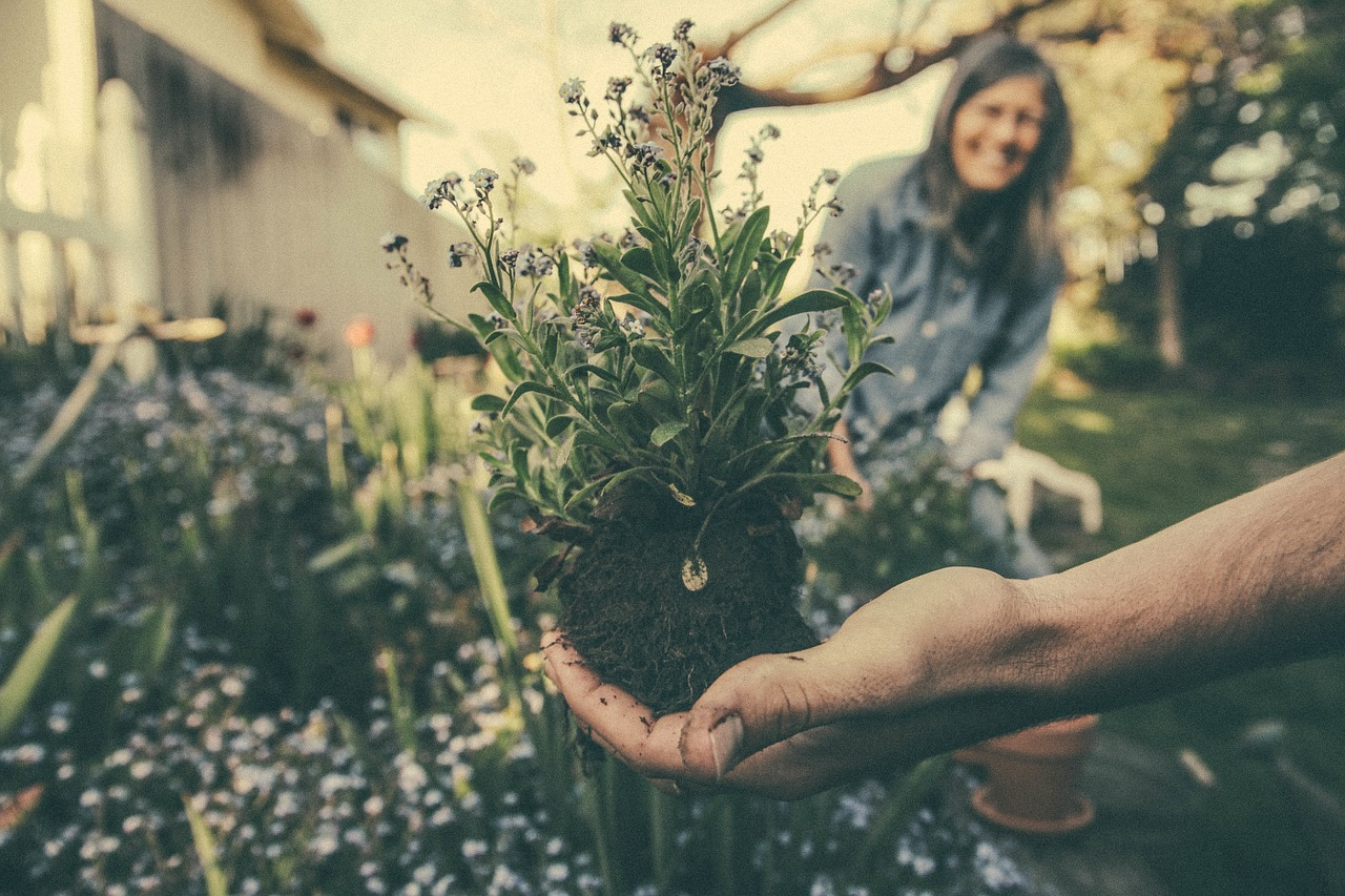 planting and gifting allergy friendly flowers