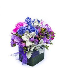 violet-bliss